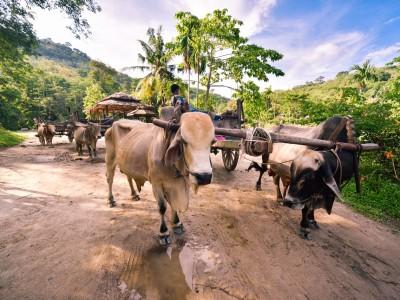 safari_phuket
