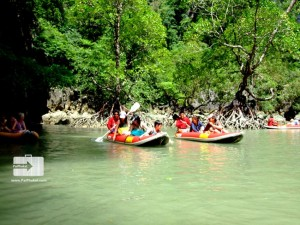 the mangrove touch with nature