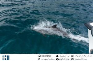 dolphin catamarn to Maiton and racha island sunset tour